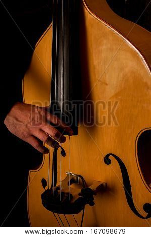 The musician plays the double bass. The light tone color of the bass