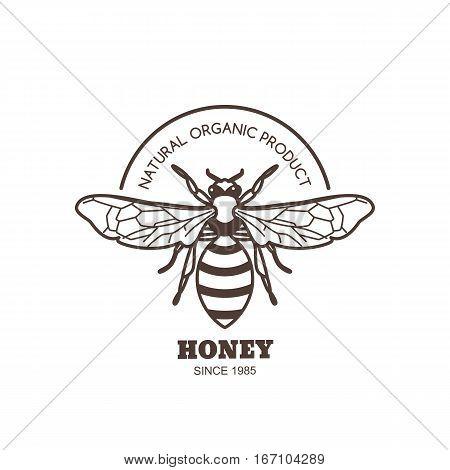 Vector Vintage Honey Label Design. Outline Honeybee Logo Or Emblem. Linear Bee Isolated On White Bac