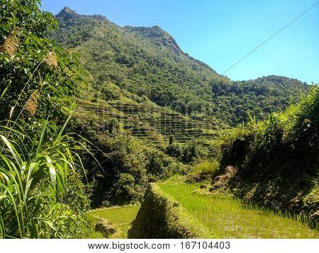 Rice Terraces, Banaue in Phillipines . .