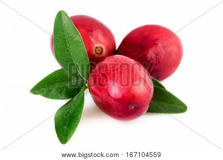 Cranberries closeup. Three cranberry isolated on white