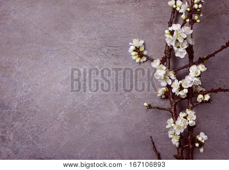 Spring floral background blooming branch on a vintage surface top view blank space