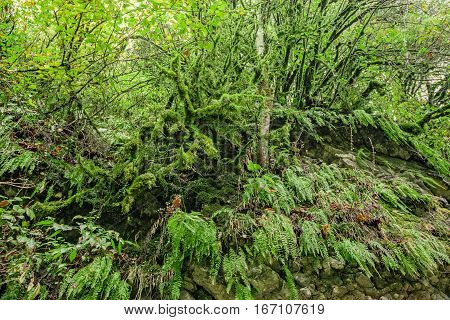 Subtropical green foliage leaves with ferns and moss on rock wall