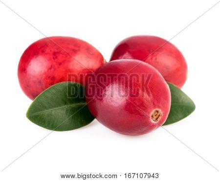 Cranberries close up. Three ripe cranberry isolated on white