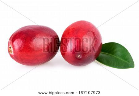 Cranberries close-up two fresh cranberry isolated on white