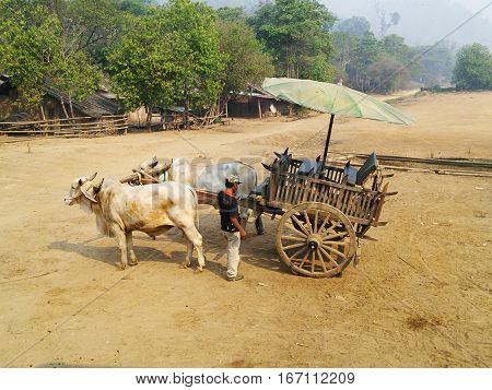 Mules Cart And Man Staying On Yellow Ground In Thailand.