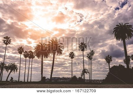 Silhouette of amazing landscape of beautiful palm trees under the cloudy sky in a park outdoor - Sunlit palms in a warm tropical place - Summer holidays and vacations concept - Warm filter edit