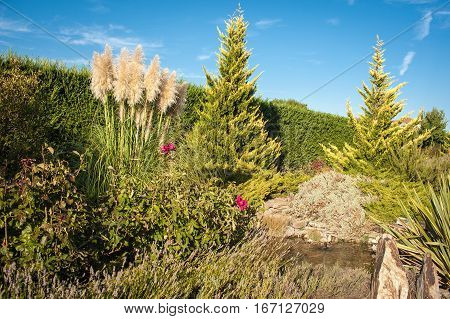 water garden with green plants under a blue sky