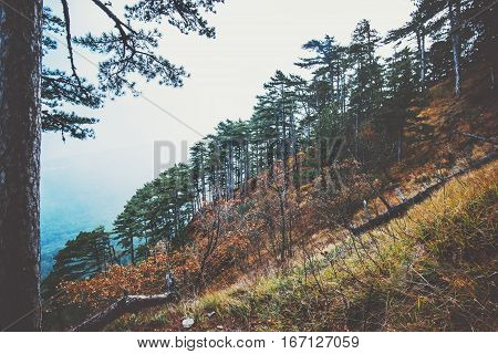 Coniferous Forest Landscape aerial view trees background Travel serene scenery