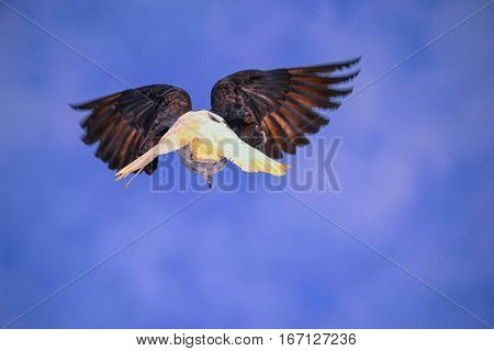 pigeon, bird, flight, free flight, a pigeon,