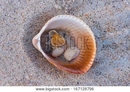 Shells and Sand Inside Larger Shell Along the Beach