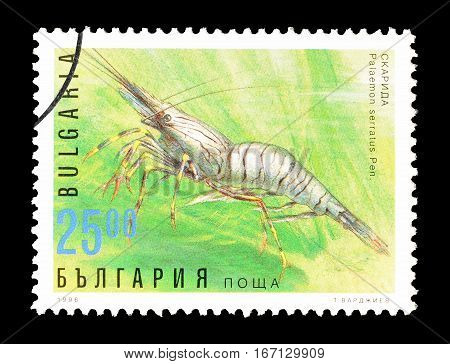 BULGARIA - CIRCA 1996 : Cancelled postage stamp printed by Bulgaria, that shows Common Prawn.