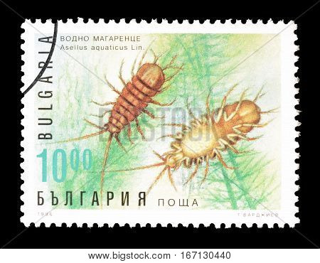 BULGARIA - CIRCA 1996 : Cancelled postage stamp printed by Bulgaria, that shows Waterlouse.
