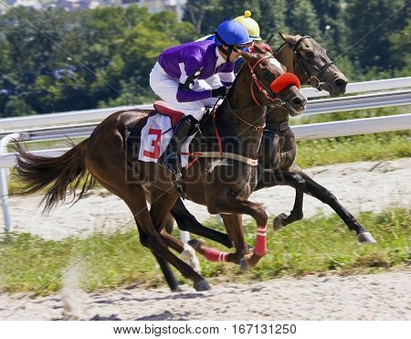 Horse race for the traditional prize Bolshoi Letni in Pyatigorskthe largest in Russia.