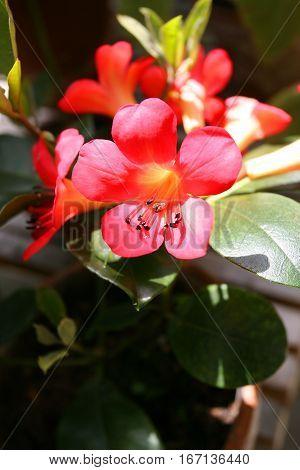 Unidentified red flower from Dunedin, New Zealand