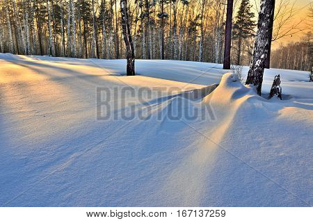 Beautiful scenery of a winter birches grove at sunset snowdrift near the trunk of birch tree golden sky and striped shadows on the snow.