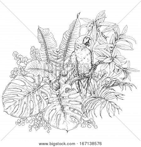 Hand drawn branches and leaves of tropical plants. Monochrome floral bunch with bird. Macaw sitting on liana branch. Black and white coloring page for adult. Vector sketch.