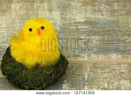 Yellow Easter Chicken in a nest of moss as an Easter decoration on old wooden table with copy space on the right. Close horizontal view