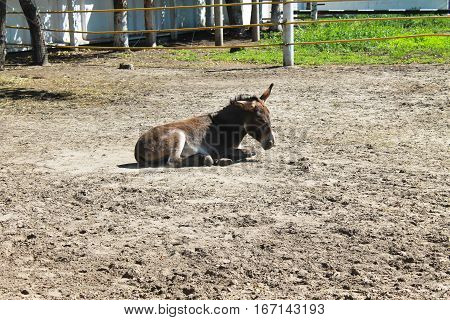 Donkey in a paddock on the farmyard
