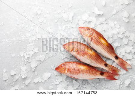 Fresh red mullet fish on icy stone background, top view