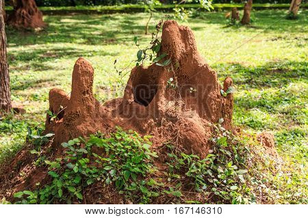 Termite mound in bush of Sri Lanka