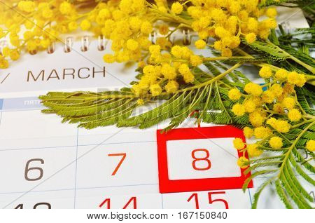 8 March postcard - mimosa flowers branch over the calendar with framed 8 March date.  8 March festive postcard
