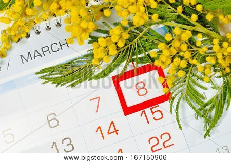 8 March postcard - mimosa flowers branch over the calendar with framed 8 March date. 8 March is International women day