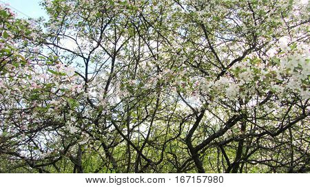 A garden is especially wonderful in spring. The branches of trees are covered by colors.