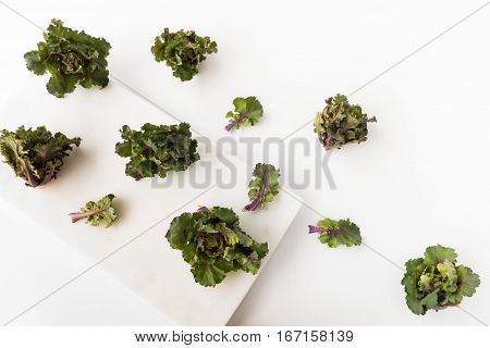 Kalettes a new vegetable a British-bred cross between Brussels sprouts and kale on a white marble board and background.