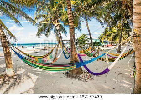 Tropical scene- hammocks between palm trees on sandy beach  in Caye Caulker island, Belize.