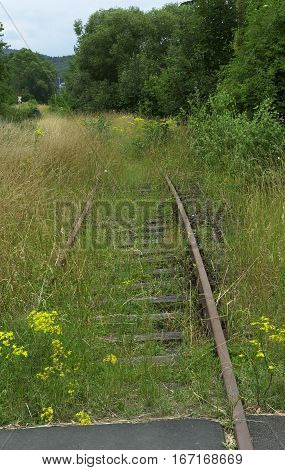 Railroad covered with green grass and yellow flowers