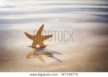 Starfish on a golden sandy beach, with ripples of seawater and space for your text.