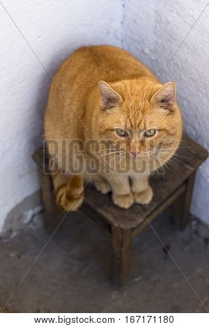 Red fatty cat on the stool in the corner