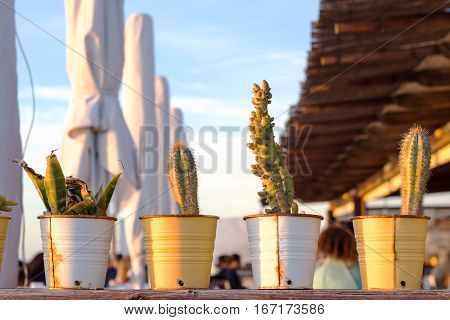 A line of many diferent cactus in old rusty pots on top of a wooden shelf during sunset.