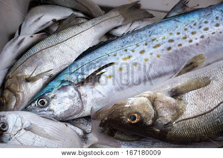 la pesca en la costa, pescadores que viven de ella, el mar su fuente.