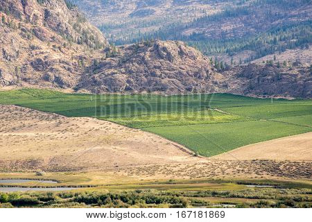 Green vineyard surrounded by a dry rocky landscape