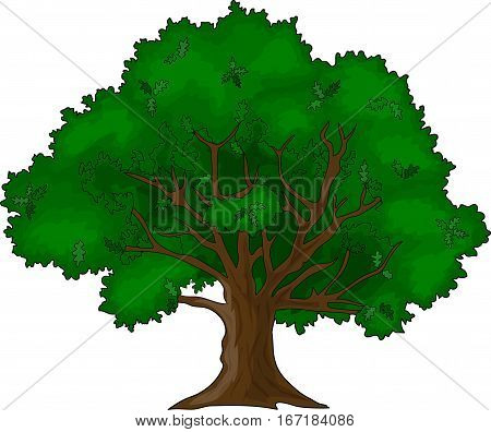 The green oak on a white background.