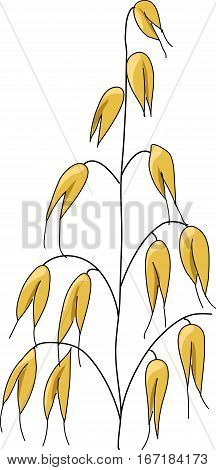 The stalk with yellow grains. An oat.