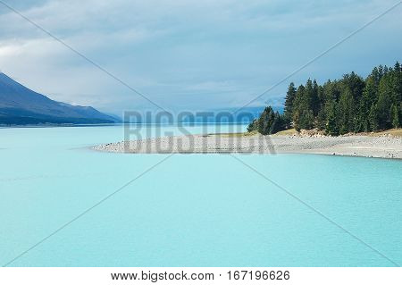 The aqua water of Lake Tekapo with pine trees on the South Island of New Zealand