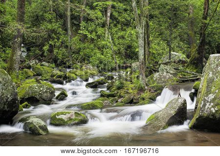 Relaxing Roaring Fork Creek along the Roaring Fork Motor Tour in the Great Smoky Mountains National Park Tennessee USA