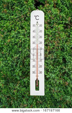 Thermometer on the green fern leave wall