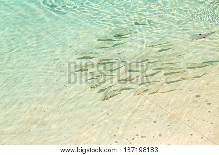 School of fish group of fish in shallow transparent water by the beach coast