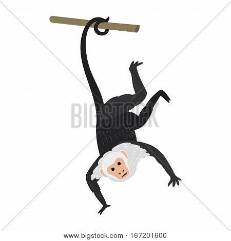Capuchin monkey rare animal vector. Cartoon macaque nature primate character. Wild zoo ape chimpanzee. Wildlife jungle animal icon.
