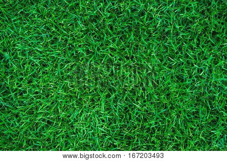 Empty Fresh Green Grass Background