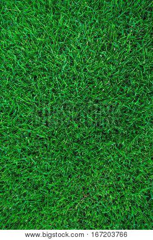 Empty Fresh Green Grass Background