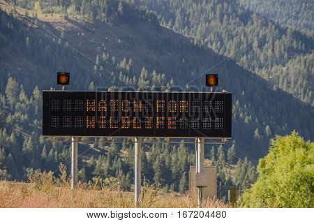 Lighted sign tells motorists to watch for wildlife on a mountain road