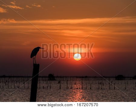 Little Chinese Egret Bird Perched On A Dry Bamboo , In Sunset Light
