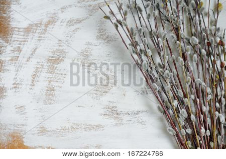 Pussy-willow Twigs On White Background