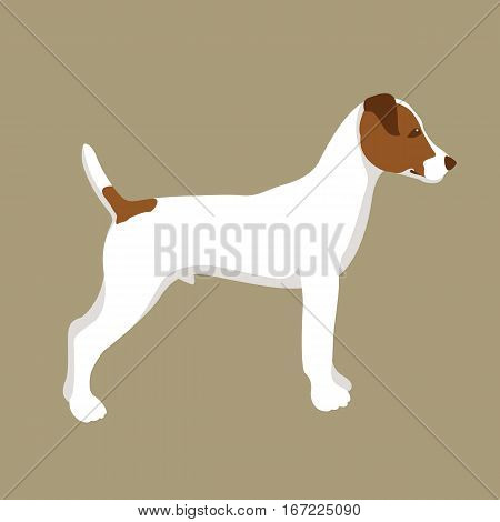 russel Terrier vector illustration style Flat profile