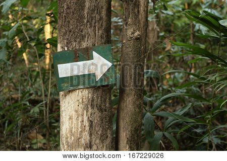 Arrow sign on tree in the forest
