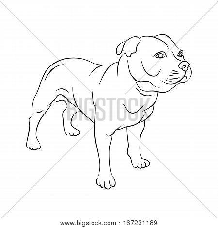 american staffordshire terrier vector illustration  line side